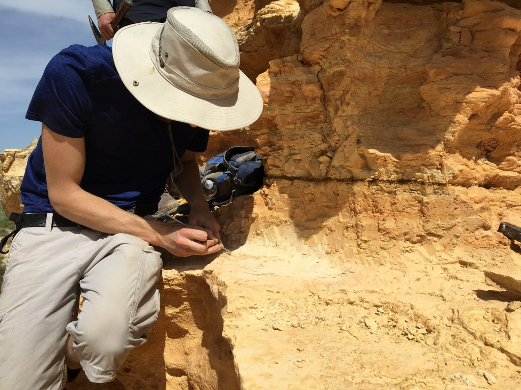 Photograph of a fossil collector excavating the remains of a pterosaur from the Kansas chalk.