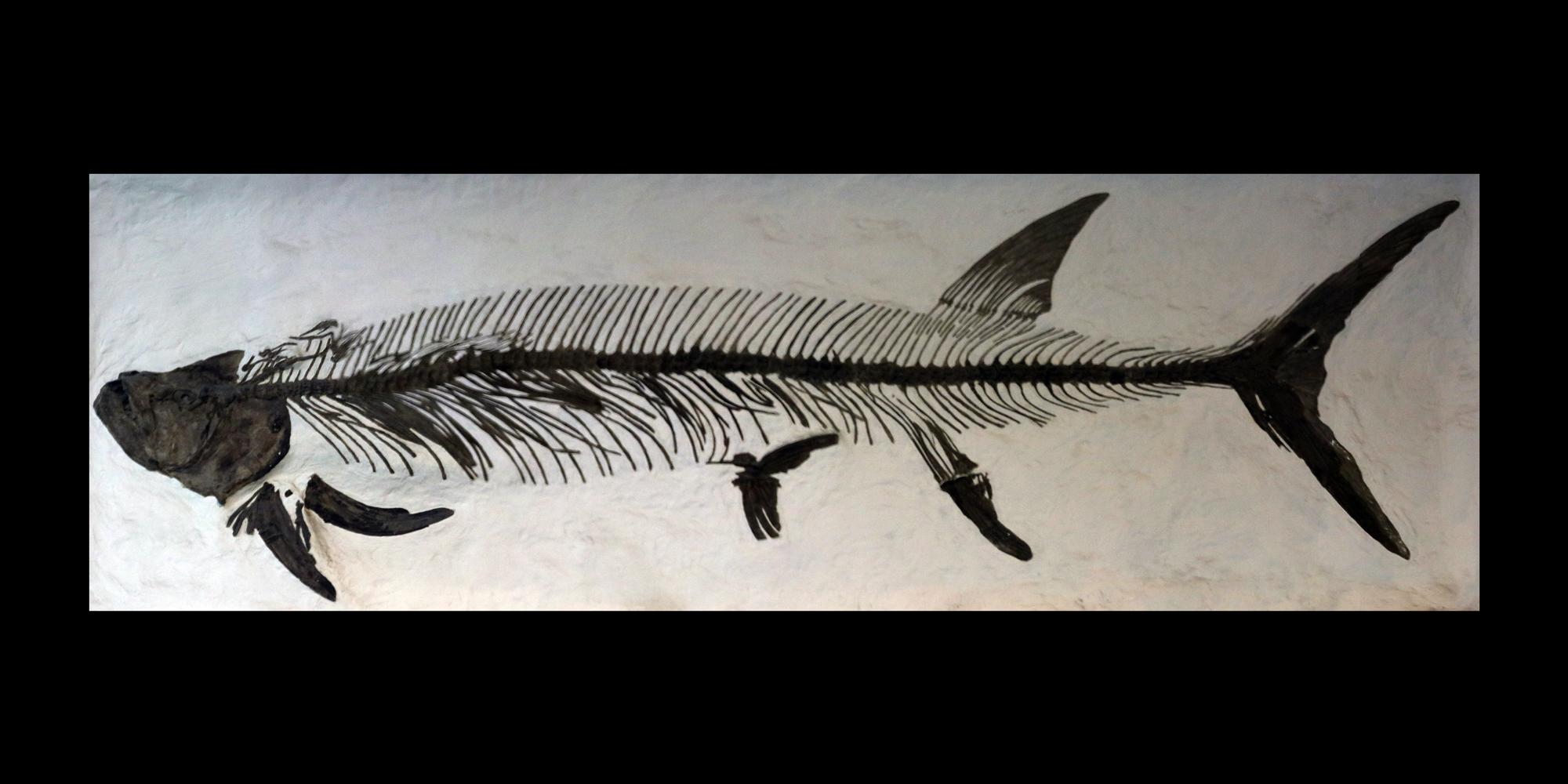 Cretaceous Atlas of Ancient Life | Xiphactinus audax