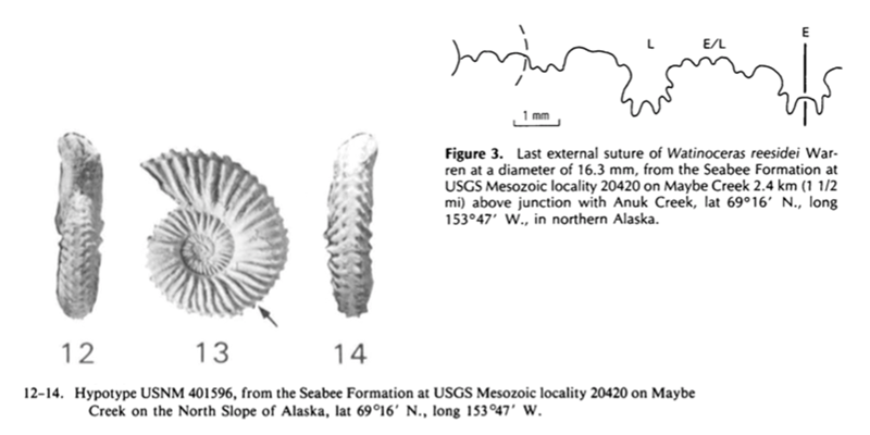 Images of <i>Watinoceras reesidei</i> from Cobban (1988; USGS Bulletin 1788; public domain).