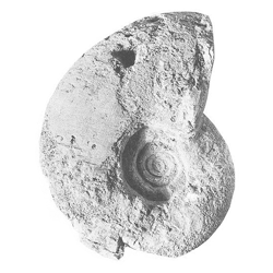 Gaudryceratidae