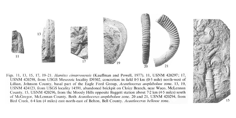 Specimens of <i>Hamites cimarronensis</i>. See original caption for additional details. Image modified from pl. 15, figs 11, 13, 15, 17, and 19-21 in Kennedy and Cobban (1990a in <i>Palaeontology</i>), made available through Biodiversity Heritage Library via a CC BY-NC-SA 4.0 license.
