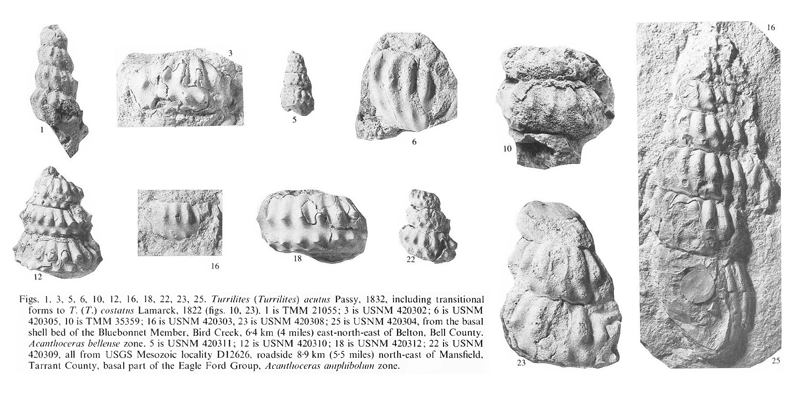 Specimens of <i>Turrilites acutus</i>. See original caption for additional details. Image modified from pl. 15, figs. 1, 3, 5, 6, 10, 12, 16, 18, 22, 23, and 25 in Kennedy and Cobban (1990a in <i>Palaeontology</i>), made available through Biodiversity Heritage Library via a CC BY-NC-SA 4.0 license.