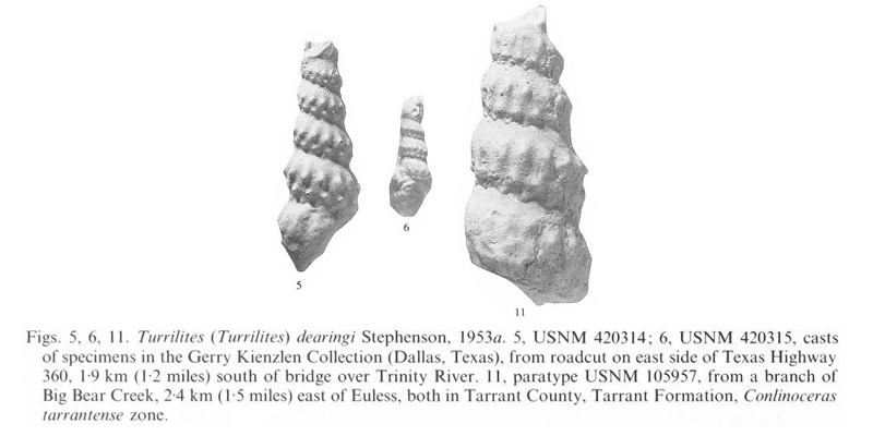 Specimen of <i>Turrilites dearingi</i>. See original caption for additional details. Image modified from pl. 12, figs. 5, 6, and 11 in Kennedy and Cobban (1990a in <i>Palaeontology</i>), made available through Biodiversity Heritage Library via a CC BY-NC-SA 4.0 license.