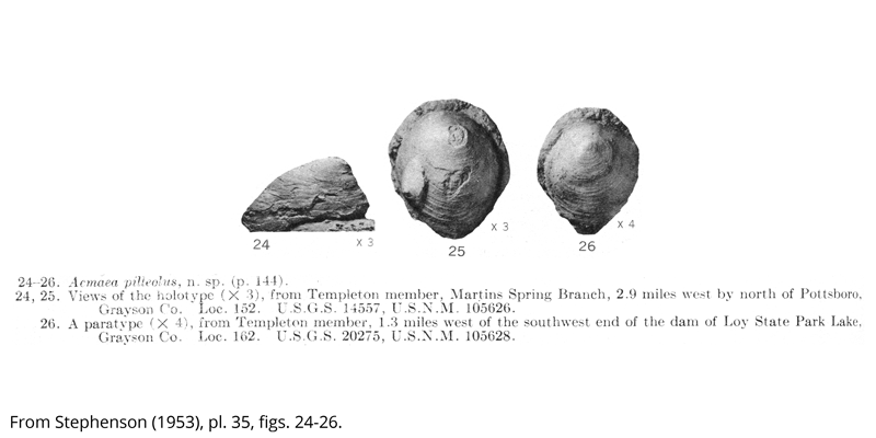 Holotype (USNM 105626) and paratype (USNM 105628) of <i>Acmaea pilleolus</i> from the Cenomanian Woodbine Formation (Templeton Member) of Grayson County, Texas. Image is from Stephenson (1953, pl. 35, figs. 24-26).