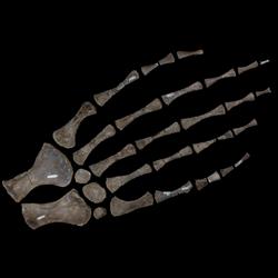 Tylosaurus nepaeolicus