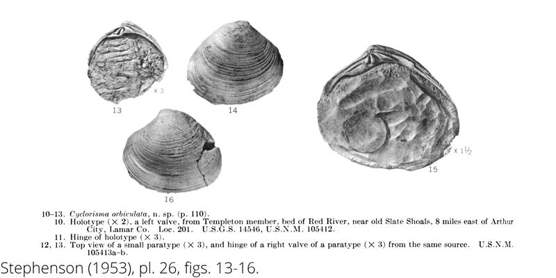 <i> Cyclorisma orbiculata </i> from the Cenomanian Woodbine Fm. of Texas (Stephenson 1953).