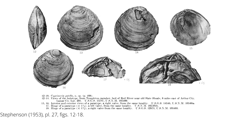 <i> Cyprimeria patella </i> from the Cenomanian Woodbine Fm. of Texas (Stephenson 1953).