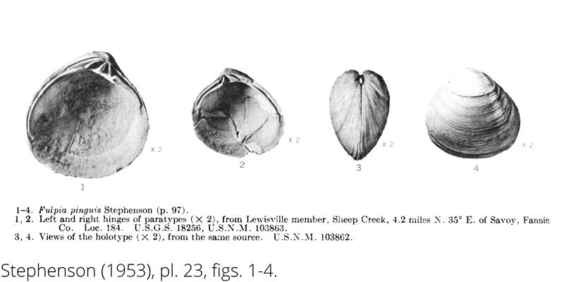 <i> Fulpia pinguis </i> from the Cenomanian Woodbine Fm. of Texas (Stephenson 1953).