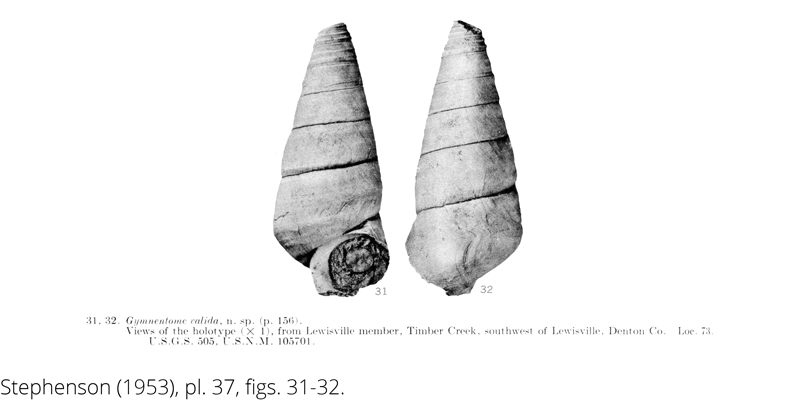 <i> Gymnentome valida </i> from the Cenomanian Woodbine Fm. of Texas (Stephenson 1953).
