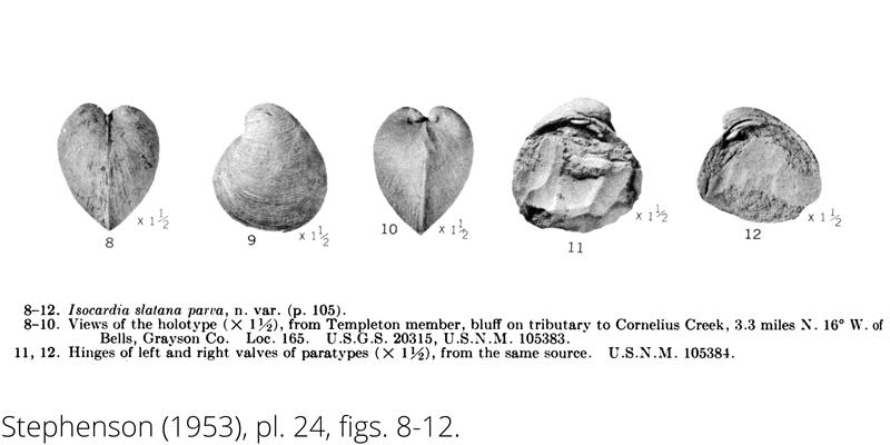 <i> Isocardia slatana parva </i> from the Cenomanian Woodbine Fm. of Texas (Stephenson 1953).