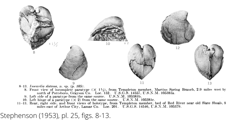 <i> Isocardia slatana </i> from the Cenomanian Woodbine Fm. of Texas (Stephenson 1953).