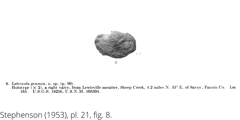 <i> Laternula gemmea </i> from the Cenomanian Woodbine Fm. of Texas (Stephenson 1953).