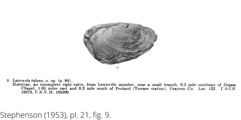 <i> Laternula tofana </i> from the Cenomanian Woodbine Fm. of Texas (Stephenson 1953).