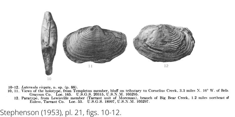 <i> Laternula virgata </i> from the Cenomanian Woodbine Fm. of Texas (Stephenson 1953).
