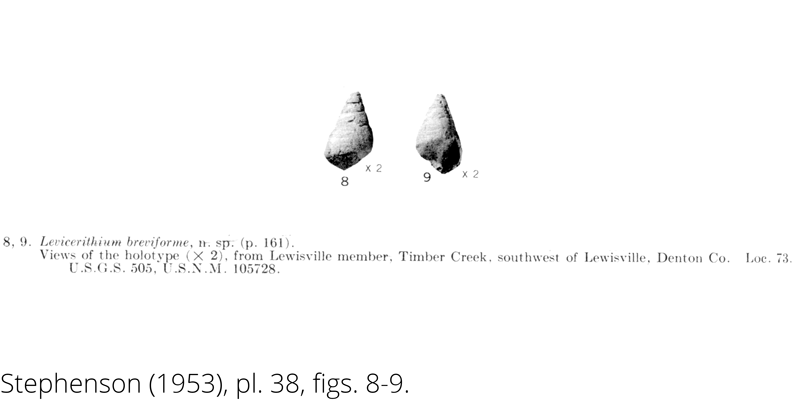 <i> Levicerithium breviforme </i> from the Cenomanian Woodbine Fm. of Texas (Stephenson 1953).