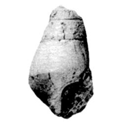 Levicerithium microlirae