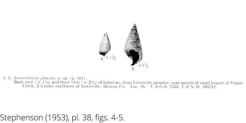 <i> Levicerithium planum </i> from the Cenomanian Woodbine Fm. of Texas (Stephenson 1953).