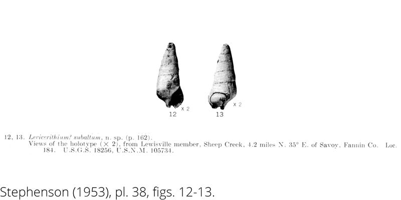 <i> Levicerithium subaltum </i> from the Cenomanian Woodbine Fm. of Texas (Stephenson 1953).