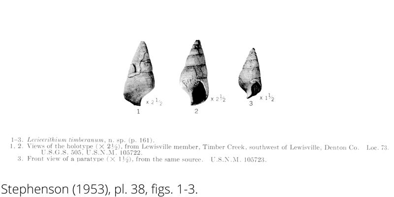 <i> Levicerithium timberanum </i> from the Cenomanian Woodbine Fm. of Texas (Stephenson 1953).