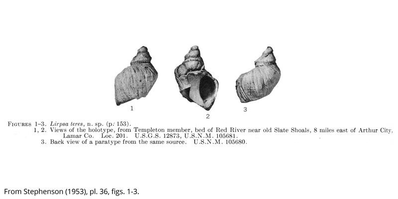 <i> Lirpsa teres </i> from the Cenomanian Woodbine Fm. of Texas (Stephenson 1953).
