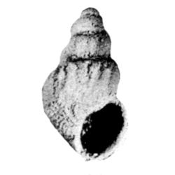 Paladmetidae