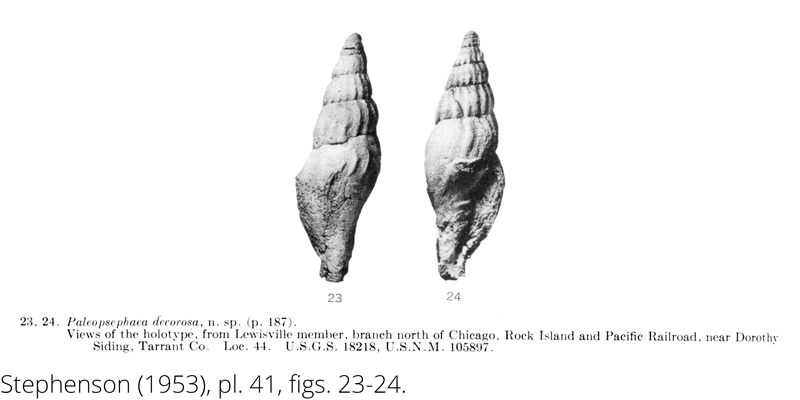 <i> Paleopsephaea decorosa </i> from the Cenomanian Woodbine Fm. of Texas (Stephenson 1953).