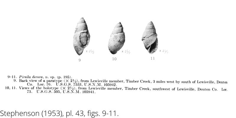 <i> Pirsila decora </i> from the Cenomanian Woodbine Fm. of Texas (Stephenson 1953).