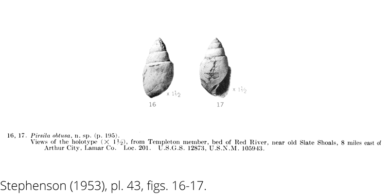 <i> Pirsila obtusa </i> from the Cenomanian Woodbine Fm. of Texas (Stephenson 1953).