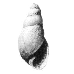 Pirsila