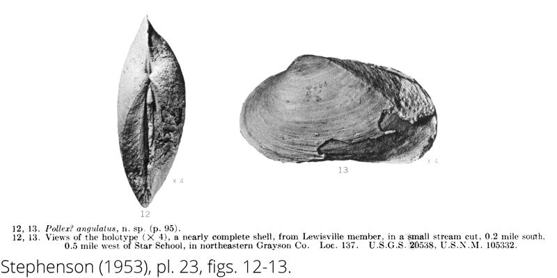 <i> Pollex angulatus </i> from the Cenomanian Woodbine Fm. of Texas (Stephenson 1953).