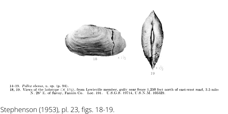 <i> Pollex obesus </i> from the Cenomanian Woodbine Fm. of Texas (Stephenson 1953).