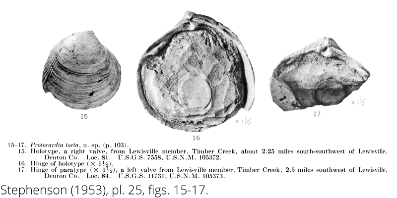 <i> Protocardia torta </i> from the Cenomanian Woodbine Fm. of Texas (Stephenson 1953).