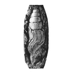 Pseudomelaniidae