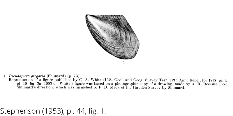 <i> Pseudoptera gregaria </i> from the Cenomanian Woodbine Fm. of Texas (Stephenson 1953).