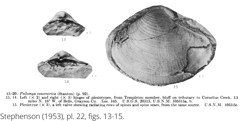 <i> Psilomya concentrica </i> from the Cenomanian Woodbine Fm. of Texas (Stephenson 1953).
