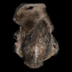 Raninidae