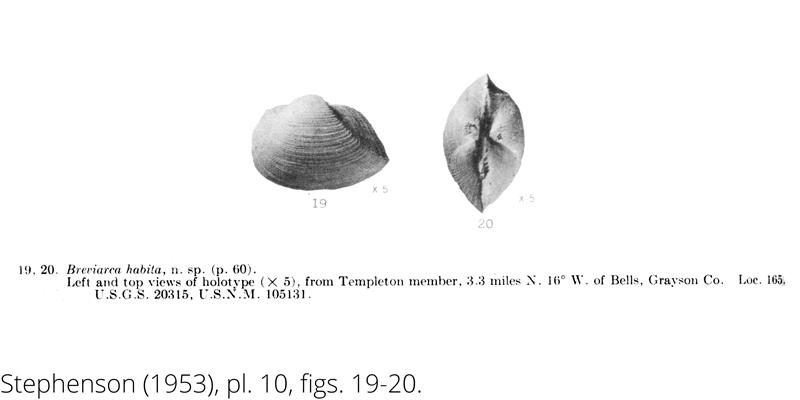<i> Breviarca habita </i> from the Cenomanian Woodbine Fm. of Texas (Stephenson 1953).
