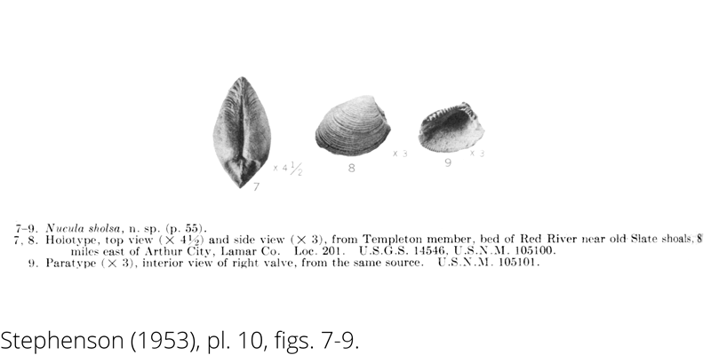 <i> Nucula sholsa </i> from the Cenomanian Woodbine Fm. of Texas (Stephenson 1953).