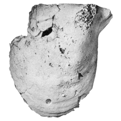 Panis cuneiformis