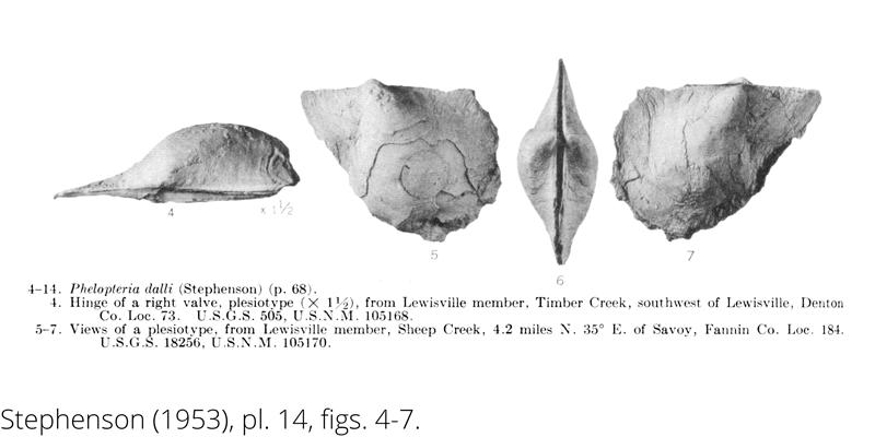 <i> Phelopteria dalli </i> from the Cenomanian Woodbine Fm. of Texas (Stephenson 1953).