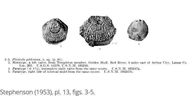 <i> Plicatula goldenana </i> from the Cenomanian Woodbine Fm. of Texas (Stephenson 1953).