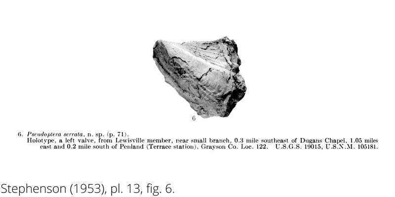<i> Pseudoptera serrata </i> from the Cenomanian Woodbine Fm. of Texas (Stephenson 1953).