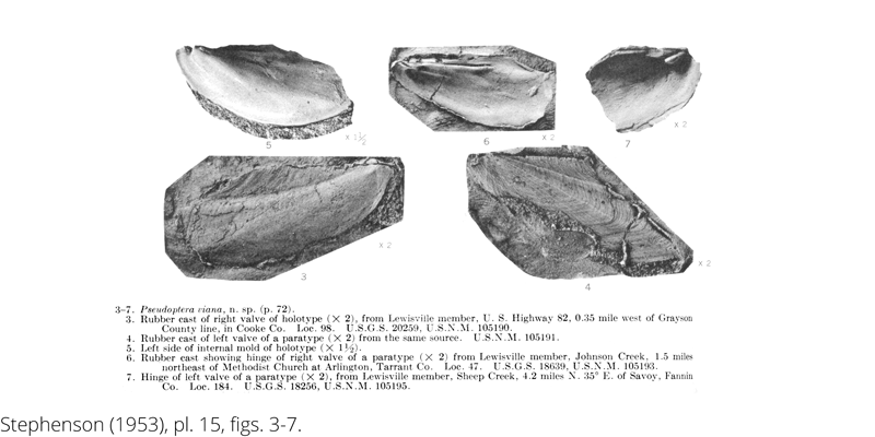 <i> Pseudoptera viana </i> from the Cenomanian Woodbine Fm. of Texas (Stephenson 1953).