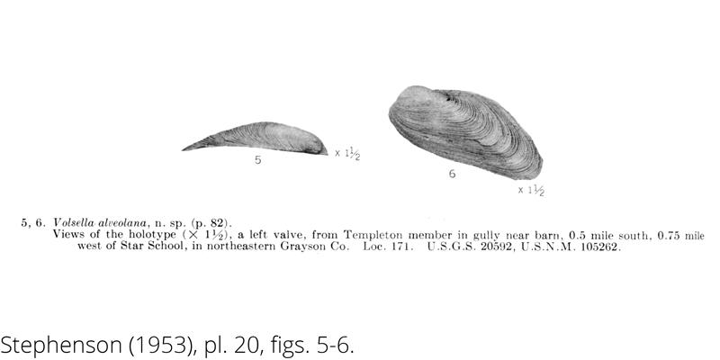 <i> Volsella alveolana </i> from the Cenomanian Woodbine Fm. of Texas (Stephenson 1953).