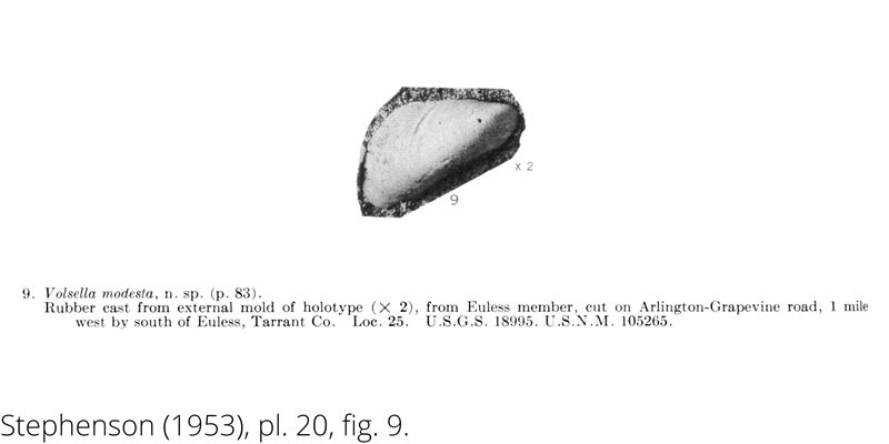 <i> Volsella modesta </i> from the Cenomanian Woodbine Fm. of Texas (Stephenson 1953).