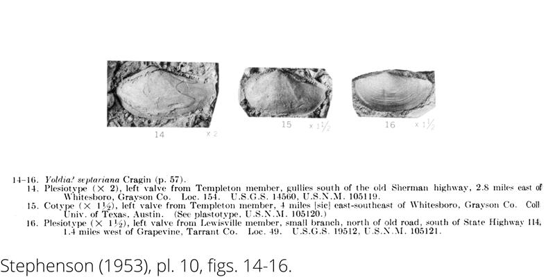 <i> Yoldia septariana </i> from the Cenomanian Woodbine Fm. of Texas. (Stephenson 1953).