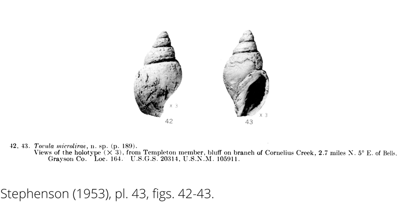 <i> Tovula microlirae </i> from the Cenomanian Woodbine Fm. of Texas (Stephenson 1953).
