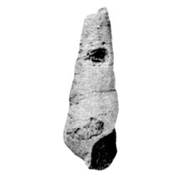 Vascellum leve