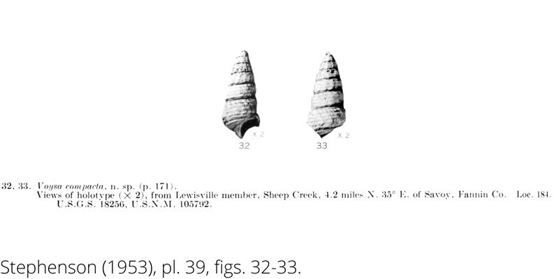 <i> Voysa compacta </i> from the Cenomanian Woodbine Fm. of Texas (Stephenson 1953).