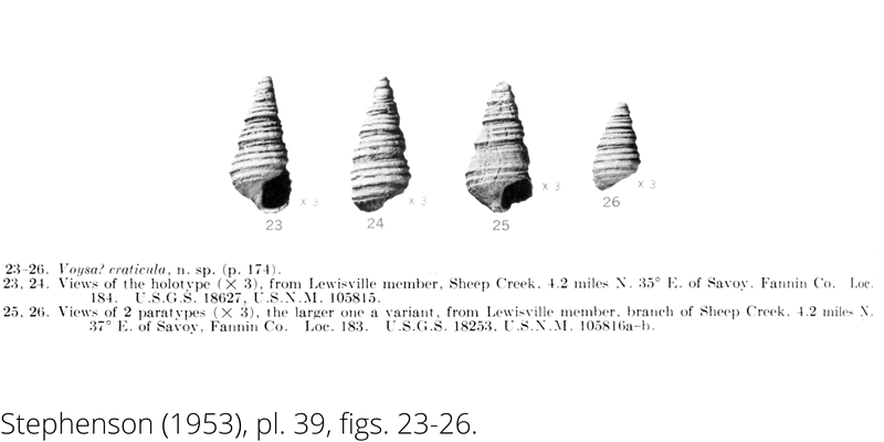 <i> Voysa craticula </i> from the Cenomanian Woodbine Fm. of Texas (Stephenson 1953).